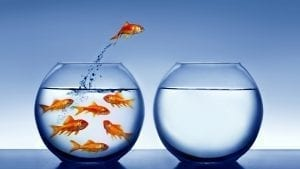 debt free fish